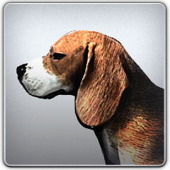 Regal_Beagle