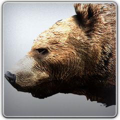 Bear_Standing_Up