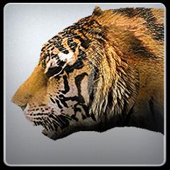 tiger17_1073